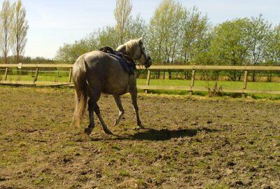 scheefheid paard