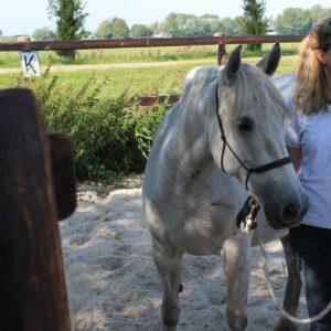 freestyle grondwerk natural horsemanship