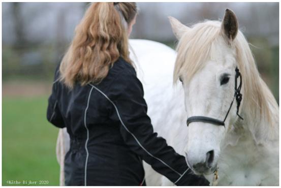 grondwerk paard